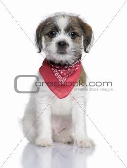 Bastard puppy (3 months)