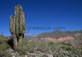 Cactus landscape
