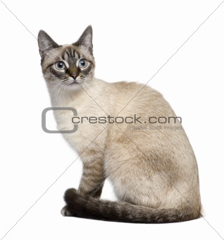 Crossbreed between a siamese and a tabby (9 months) in front of