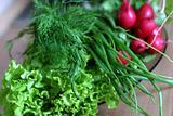 Vegetables for salad - 3