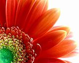 Flower divine