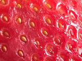 strawberrry seeds