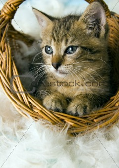 Cat in the basket