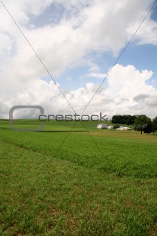 Green Field Farmland