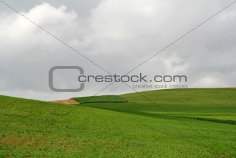 Green Open Farmland