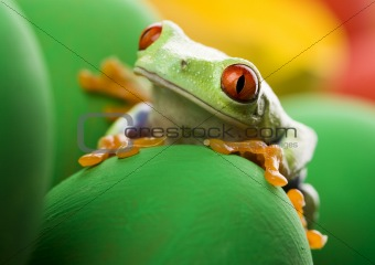 Frog and eggs