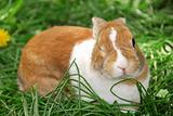 Winking bunny