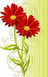 two gerbera flower background