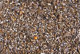Seaside gravel and pebbles background