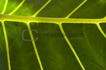 Abstract of a Tropical Leaf