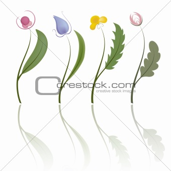 Four flowers. Vector