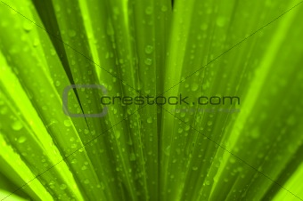 green palm leaf after rain