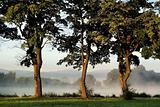 Morning landscape with trees