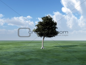Tree In Green landscape