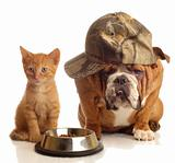 dog and cat at food dish