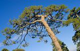 Tree crone over blue sky