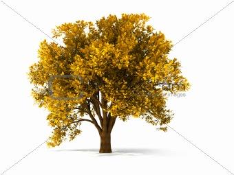 3d autumnal tree