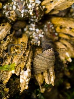 Tidepool Shells at Canon Beach