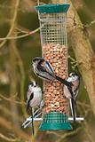 full house at the feeder