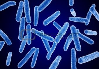 bacteria macro