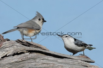 Two Birds On A Stump