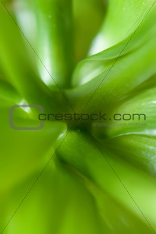 Green abstract leaves of the plant