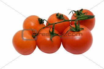 tomatoes branch