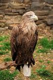 Eagle burial