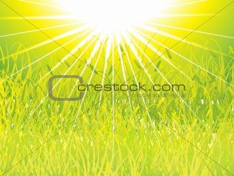 green grass sunset background, vector