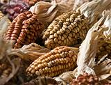 Colorful corn decoration