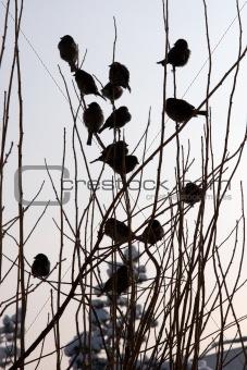 Flock of birds in winter