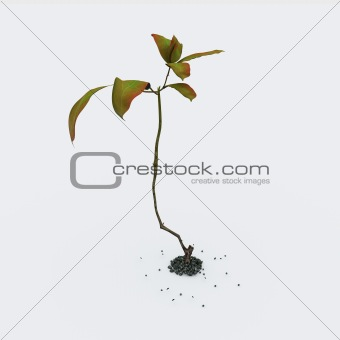Growing green plant isolated on white background