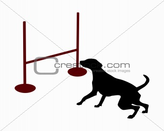 Agility: Dog is jumping over a hurdle
