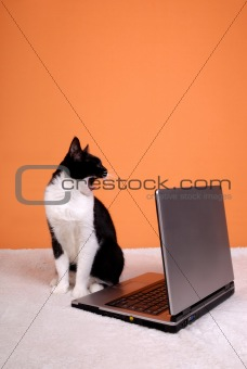 Cat yawning about the laptop