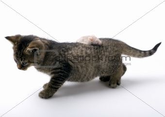 Small cute cat with mouse