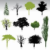 Trees collection for your design