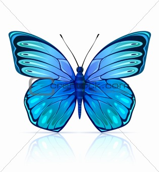 Blue butterfly insect isolated