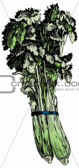 Vintage 1950s Celery