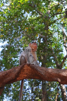 Small baby monkey on tree branch