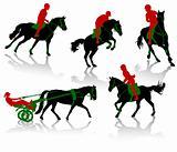 Horses conpetition