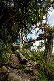 Tropical Mountain Trail