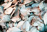 Dried Fish Background