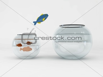 fish and bowls