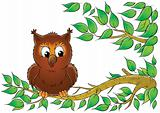 owlet