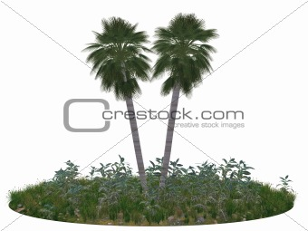 Fragment of island with two palm trees
