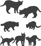 Siluets (silhouettes) of cats