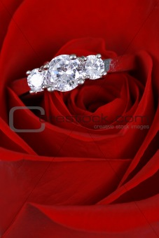 Red rose with Ring