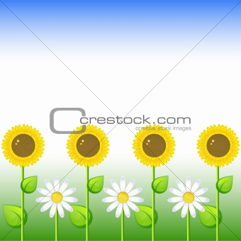 Background with sunflowers and daisy