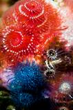 Assortment of Christmastree Worms