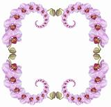Pink orchid frame